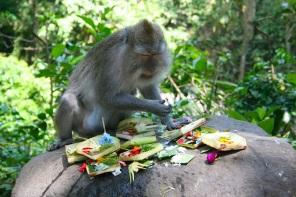 Moneky, Bali, Indonesia