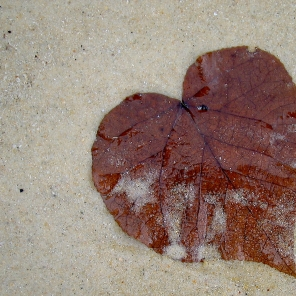 Leave heart