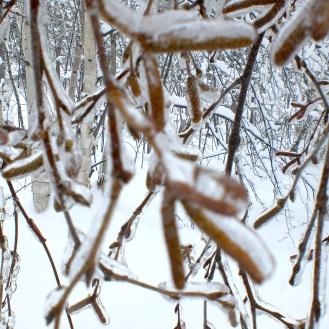 Ice wood