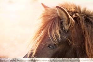 Kaoyai pony