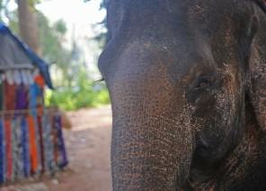 Elephant, Angkor, Cambodia