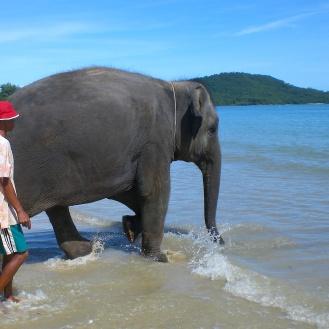 Elephant, Krabi, Thailand