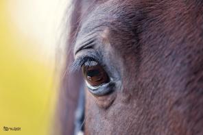 Autumn horse eye